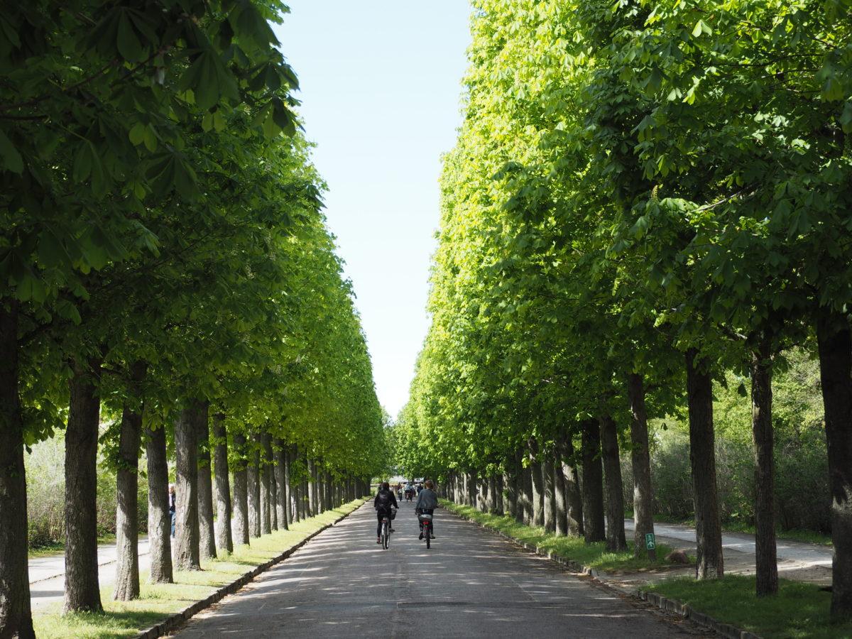 ポツダム 緑道