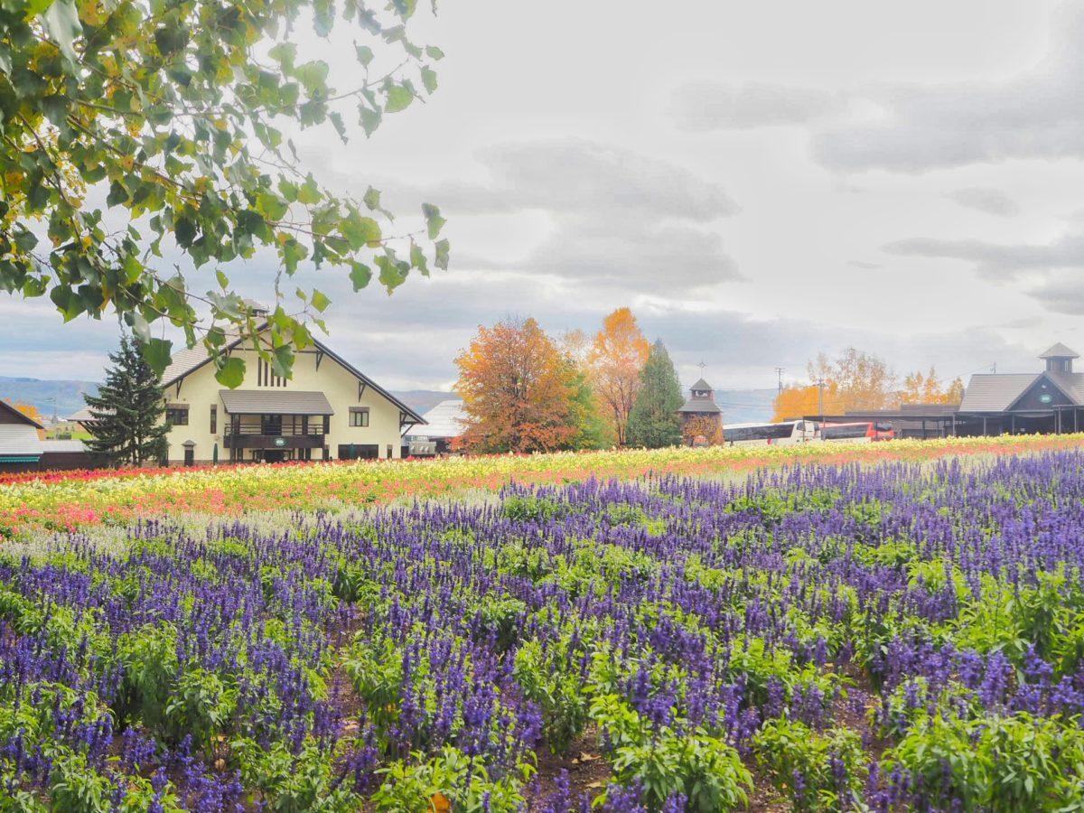 10月のファーム富田の畑