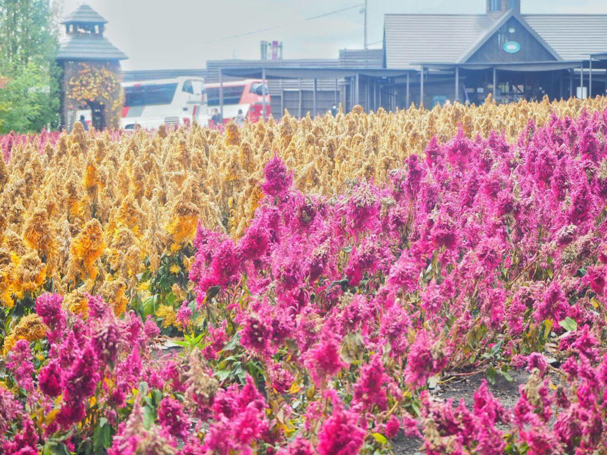 ファーム富田の秋の様子