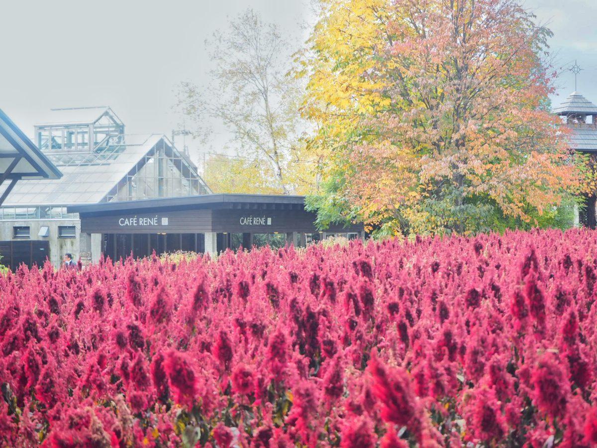 秋のファーム富田の畑